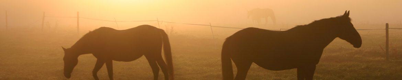 bg-pferde.jpg