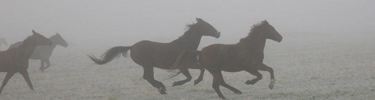 horses-bg-riding-1024x204-small.jpg
